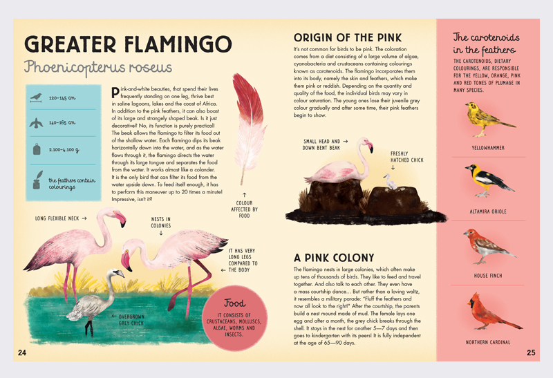 All_about_the_Feather_2
