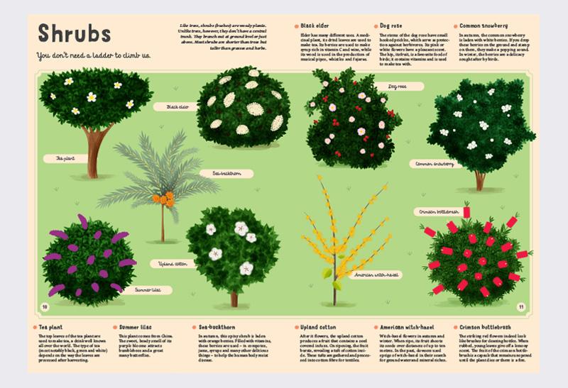Encyclopaedia_Plants_2