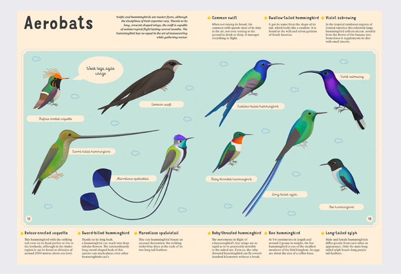 Encyclopaedia_of_Birds_2