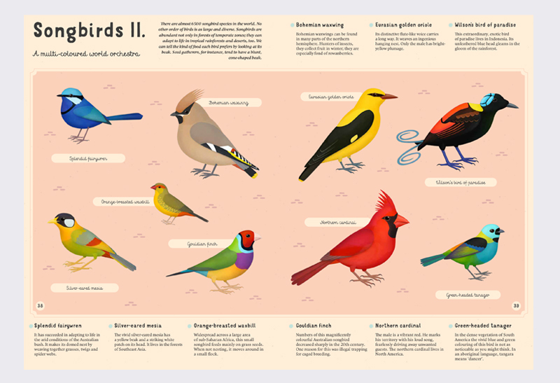Encyclopaedia_of_Birds_4